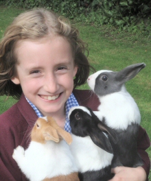 Dutch Rabbits